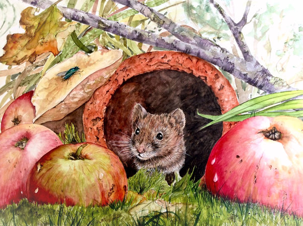 Field mouse and apples