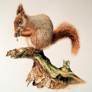red squirrel.jpg