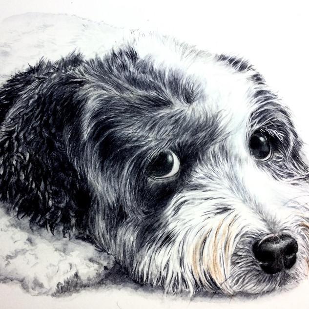 dog portrait 5 rocco.jpg