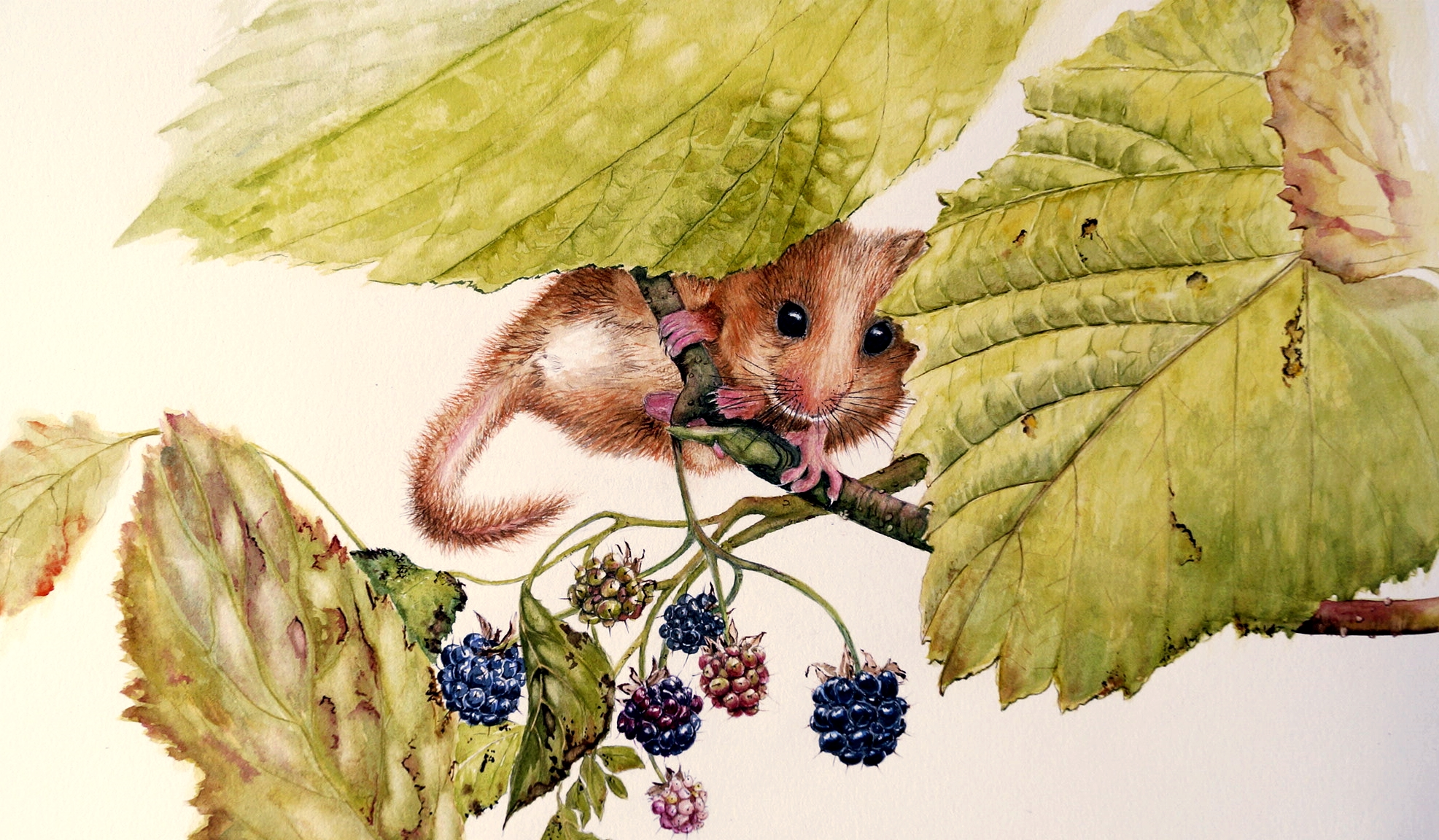 Dormouse and berries