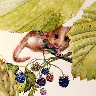 mouse and berries.jpg