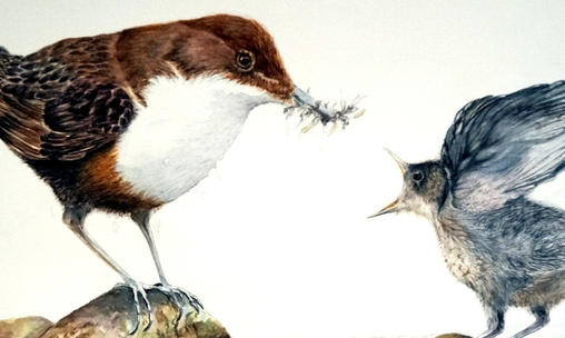 DIPPER AND CHICK