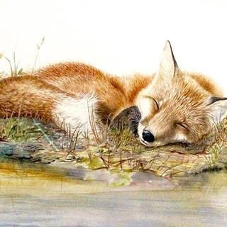 Sleepy fox in watercolour #artgallery #a