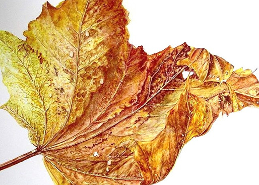 Autumn leaf from last year #artistsofins