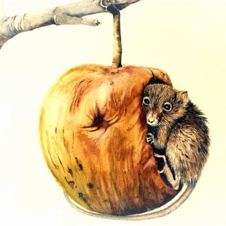 Mousey refuge