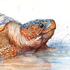 Loggerhead turtle .Part of my endangered