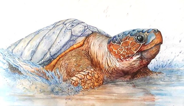 Loggerhead turtle .Part of my endangered