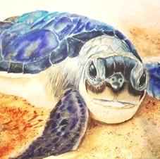 Hatchling Turtle #turtle #turtleconserva