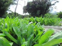 Community Organic Garden