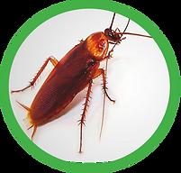 cucarachas.png