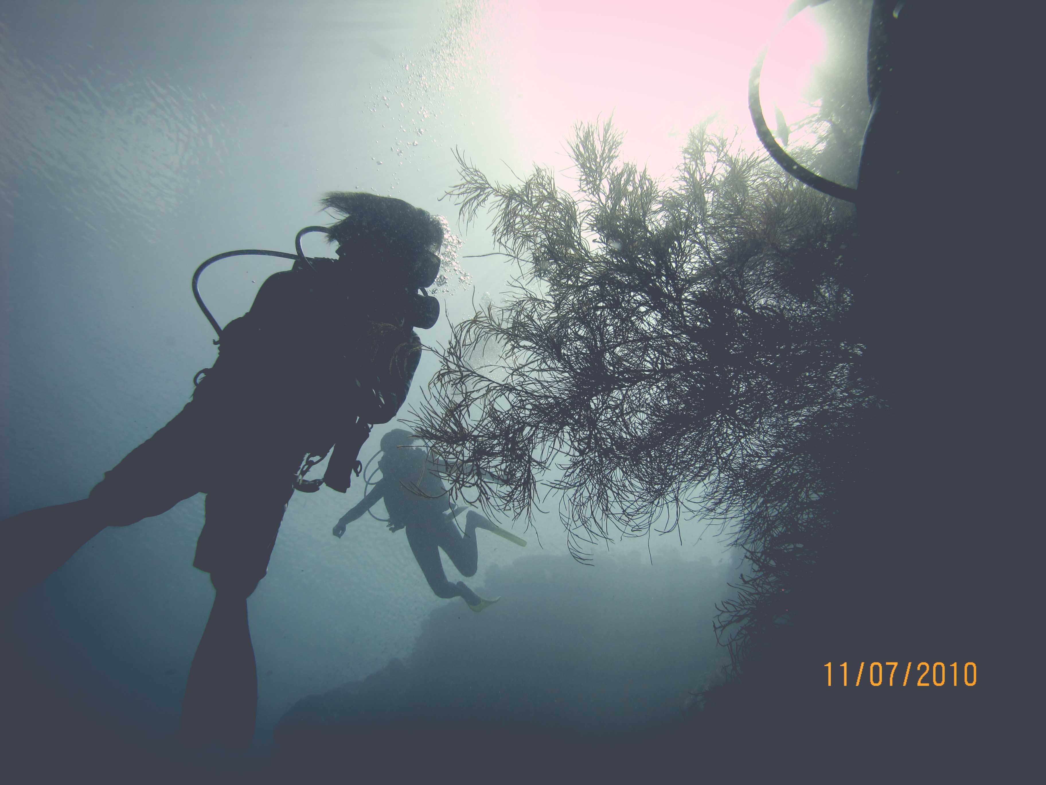 Diver on the wall