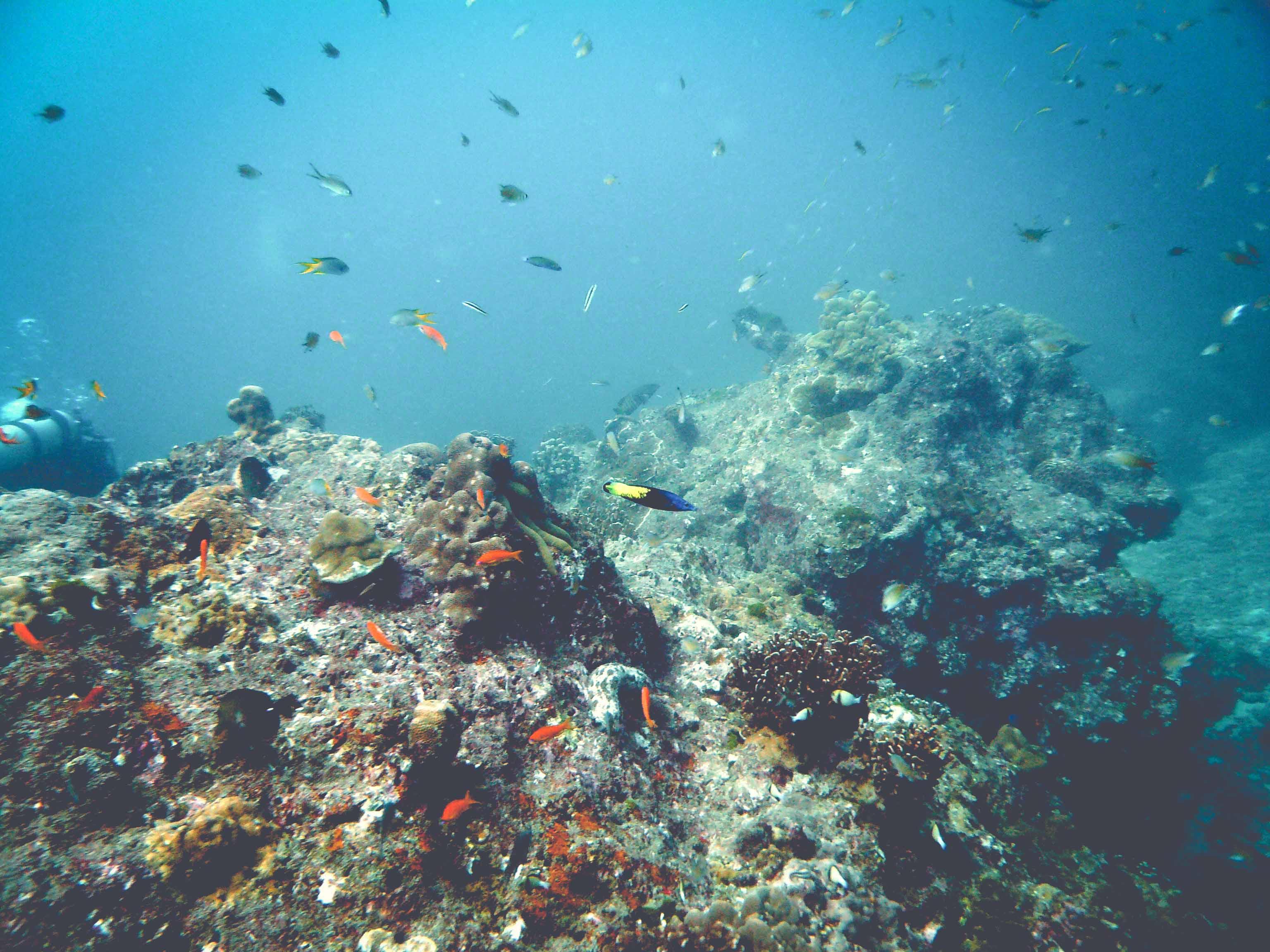 Dive Adventure Trip