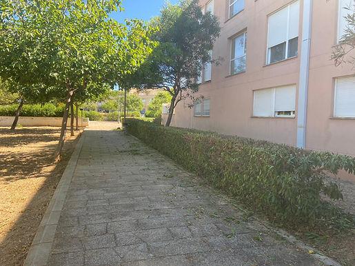 Mantenimiento zonas verdes y arbolado de Marratxí