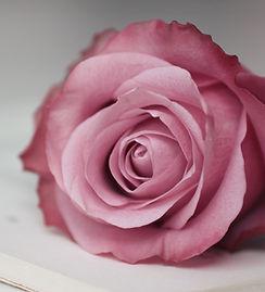 cool-pink-rose-wallpapers-61186-2681717.jpg
