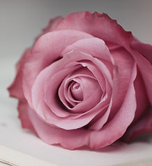 cool-pink-rose-wallpapers-61186-2681717.