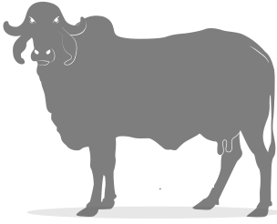 A2Cow.png