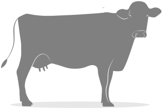 A1Cow.png