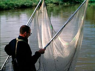 Fish Inventory