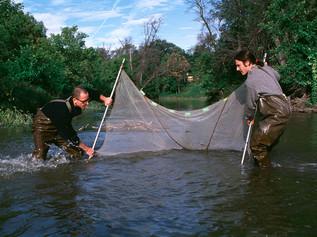 1997 Evans St. Fish Inventory