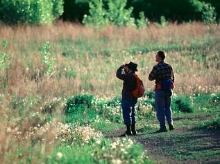 Birders at Lagimodière-Gaboury Park