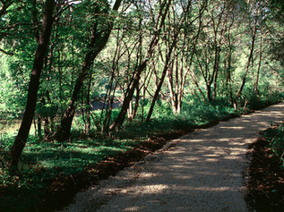 1997 Kavanagh Trail