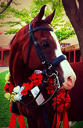 Jenna's First Horse, Multi-National Champion Takhosabi