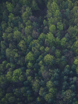 Forest _edited.jpg