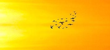 birds-SCP-string-circle.jpeg