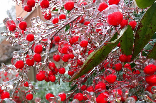 frosted%20berries_edited.jpg