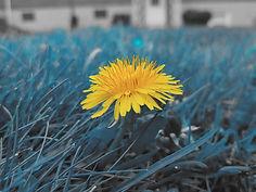 Flower5_edited_edited.jpg