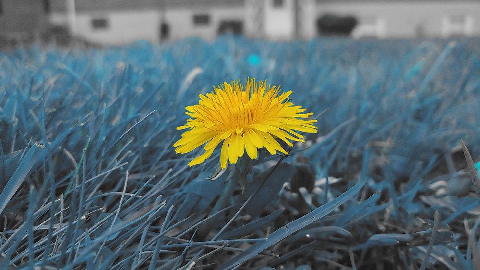 Flower5.jpg
