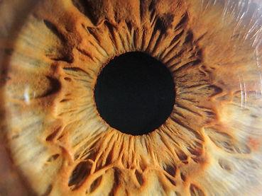 iris photo.jpg