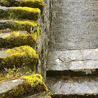 moss steps.png