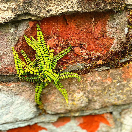 little wall plant.png