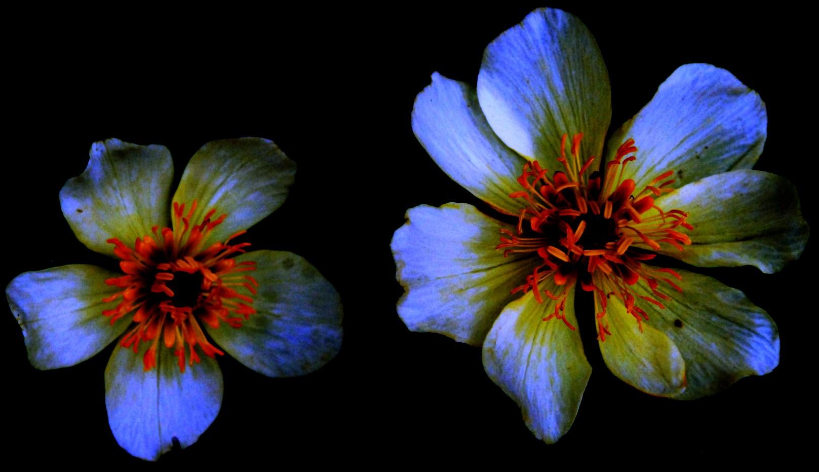 deconstructed+flowers.jpg