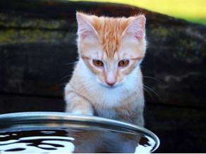 Por que os gatos não gostam de banho?