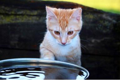 Por-que-os-gatos-nao-gostam-de-banho
