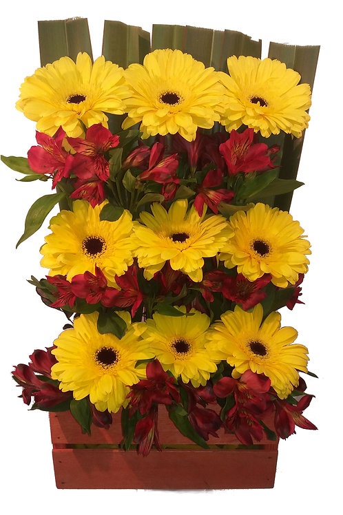 Jardineira de Gérberas amarelas e Astromélias