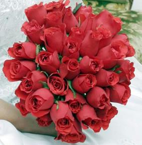 Rosas vermelhas. Entre em contato para orçamentos