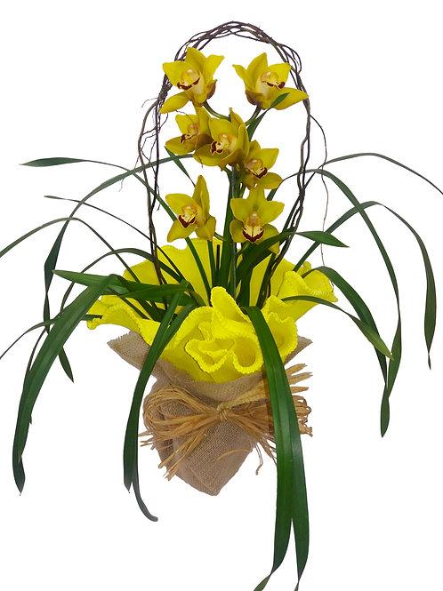 Orquídea Cymbium