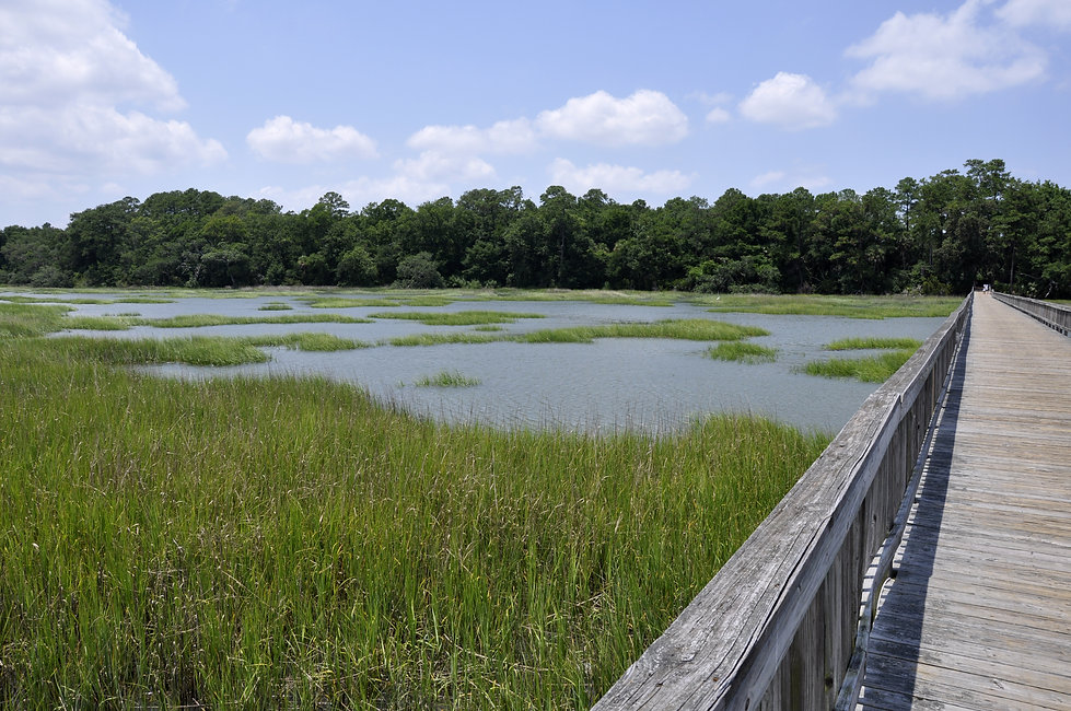 Marsh and a wooden dock by Broad Creek o