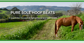 Pure Sole Hoof Beats- August