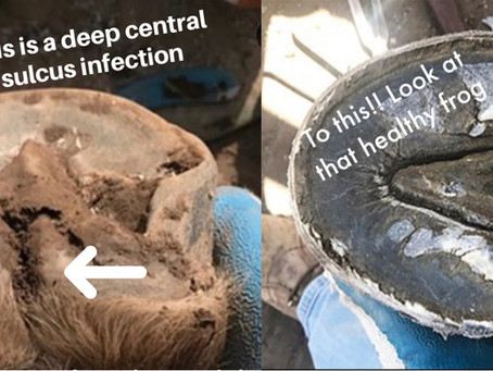 Identify and Treat Deep Central Sulcus Infections with Pure Sole Products