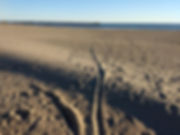 track in the sand.jpg