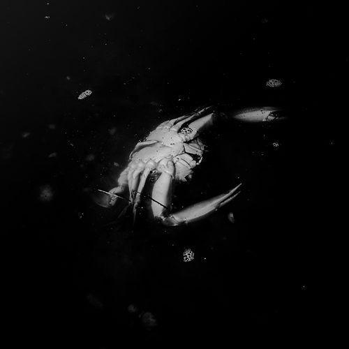 Crab Death Print (1 of 1)-2.jpg