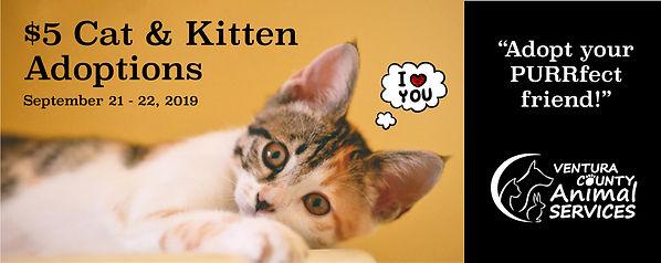 5_Cat__Kitten_Promo_Carousel.jpg