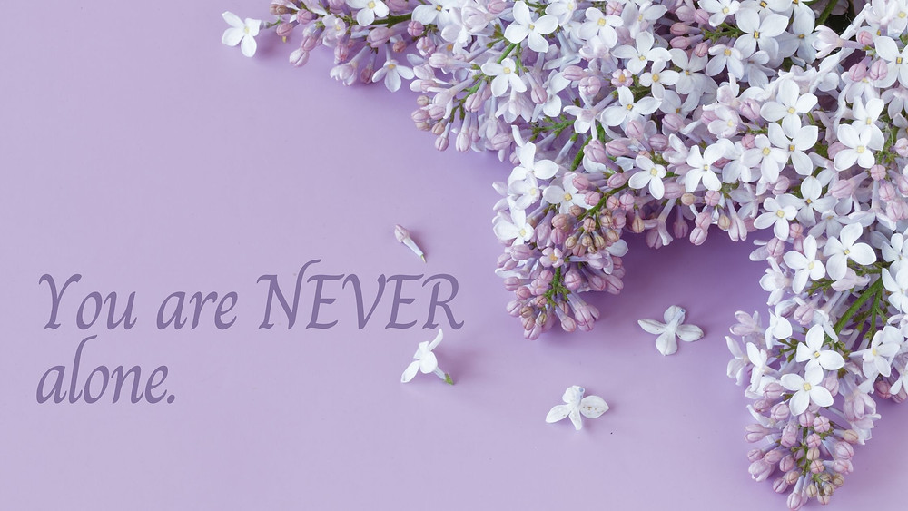 Purple flowers on a purple background.