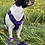 Thumbnail: Führleine lila-schwarz