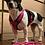 Thumbnail: Führleine pink-schwarz