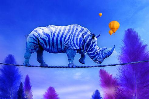 rhino petit 2.jpg